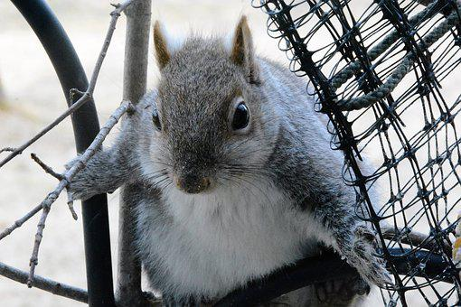 Squirrel, Young, Perched, Wary, Staring, Portrait
