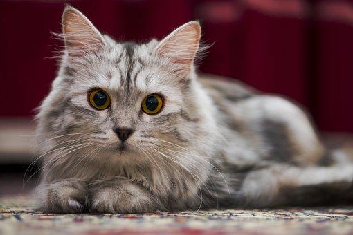 Cat, Kitty, Pet, Feline, Animal, Adorable, Cute