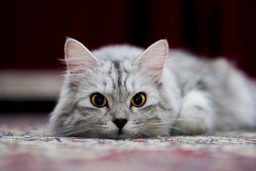 Cat, Animal, Pet, Friendship, Fur, Portrait, Trust