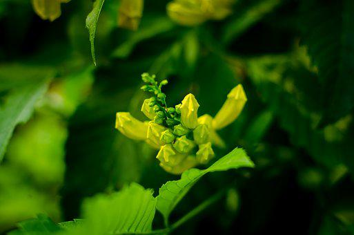 Beautiful Flowers, Yellow Flowers, Flowers Bloom