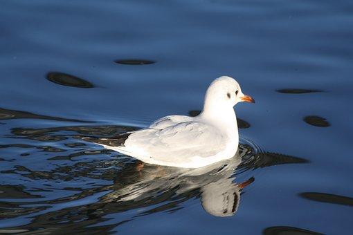 Bird, Animal, Gull, Water, Eilbek, Hh, Hamburgensien