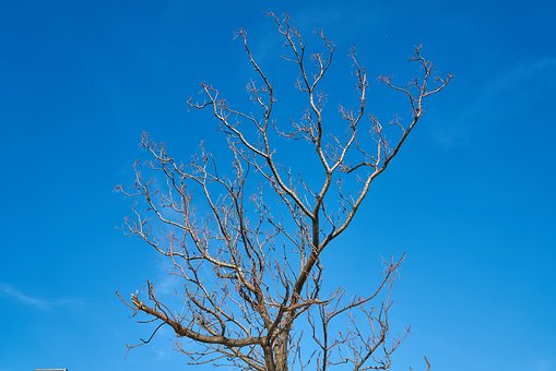 Tree, Branches, Sky, Season, Winter, Spring, Autumn