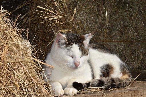 Cat, Pussy Cinnamon, Cat That Sleeps, Portrait Of Cat