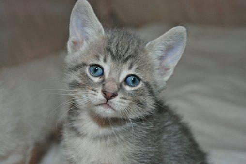 Kitten, Cat, Pet, Animal, Cute, Feline, Kitty, Adorable