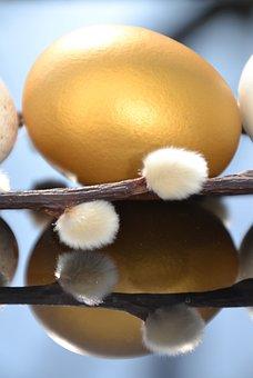 Egg, Hen's Egg, Easter, Eggshell, Close Up, Palm Kitten