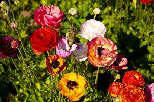 Flower, Colors, Flowers, Color, Nature, Rosa, Garden