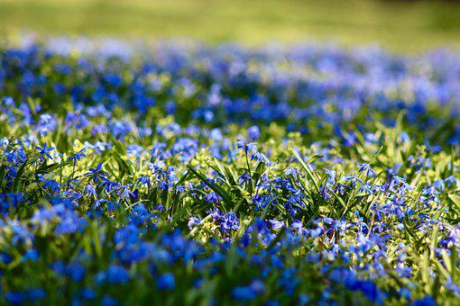Spring, Meadow, Nature, Flowers, Plant, Green, Blossom