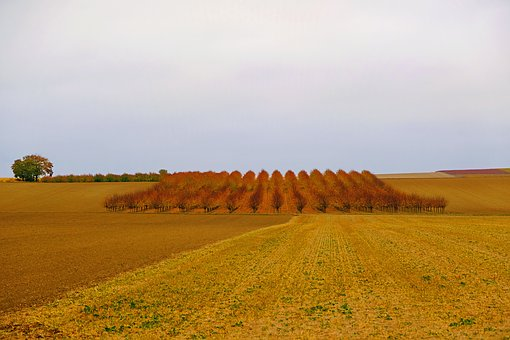 Autumn, Fruit Trees, Nature, Wide, Harvested, Leaves