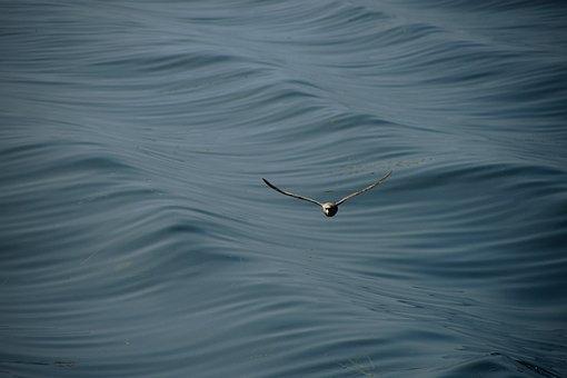 Seagull, Sea, Wave, Ocean, Animal, Bird, Water, Flight