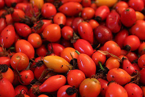 Fruit, Autumn, Red, Rose Hip, Nature, Healthy, Vitamins