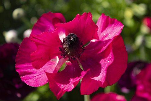 Rosa, Flowers, Roses, Flower, Nature, Love, Spring