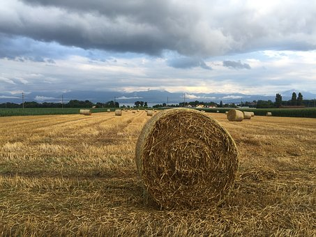Rolle, Wheat, Rural, Agricultural, Harvest, Nature