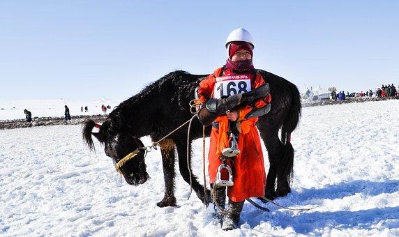 Horse Race, Kid, Boy, Horse, Animal, Childhood, Winter