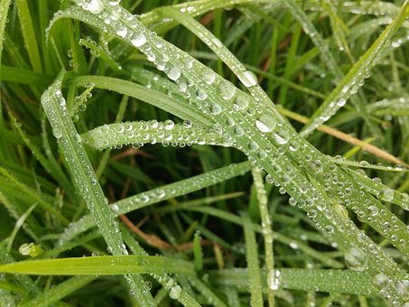 Grass, Rocio Morning, Drops