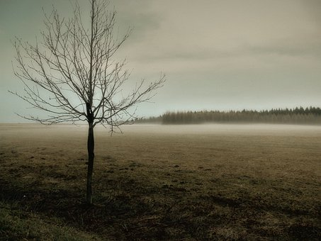 Fog, Meadow, Autumn, Nature, Landscape, Field, Dew
