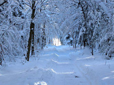 Snow, Forest Path, Walk, Recovery, Relaxation, Snowy