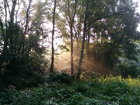 Forest, Sun, Trees, Autumn, Shadow, Leaves, Ray Of Hope