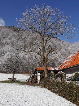 Trees, Snow, Winter, Garden, House, Fence, Walnut