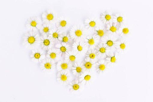 Daisy, Heart, Daisy Heart, Love, Heart Shaped, Romantic