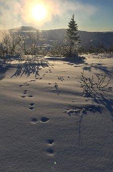 Sweden, Fells, Jämtland, Winter, Snow