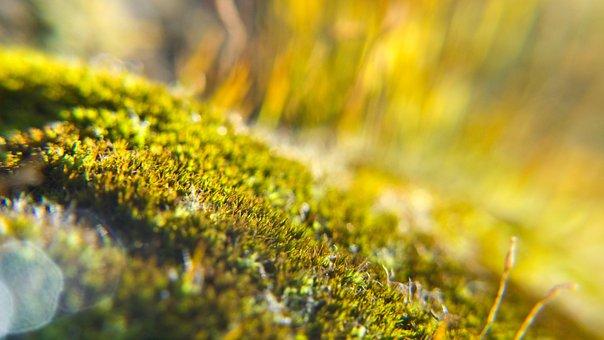 Moss, Macro, Light, Backlight, Background, Blur, Detail