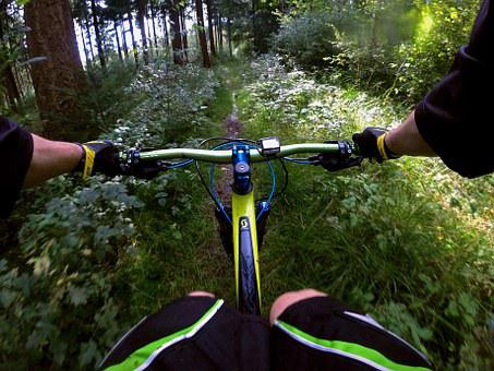 Mountain Bike, Sport, Forest, Nature, Forest Path