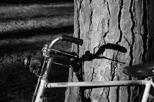 Bicycle, Tree, Shadow, Handlebars