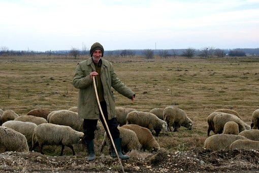 Camacho, Sheep, The Flock, Plain