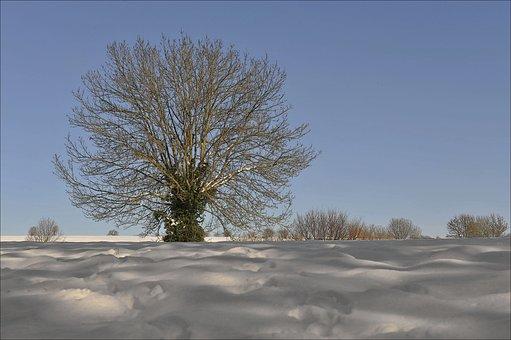 Winter, Tree, Outddor, Nature, Cold, Landscape, Snow