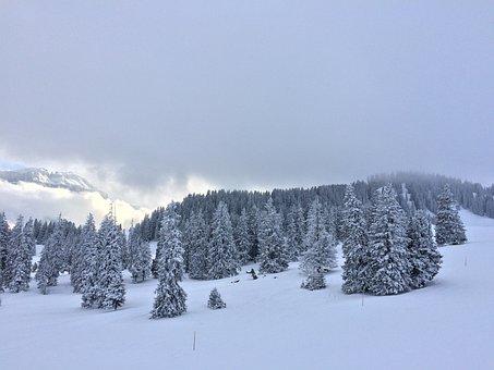 Wintry, Winter Mood, Snow Landscape, Winter Forest