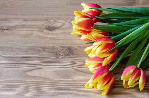Tulips, Spring, Background, Blossom, Bloom, Yellow