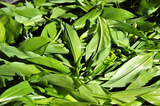 Garlic, Bear, Aromatic, Herb, Fresh, Green, Kitchen