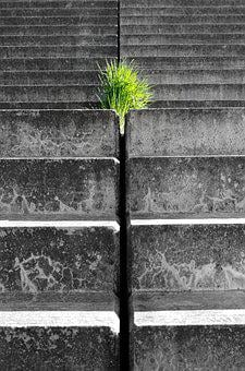 Hope, Force, Live, Breakthrough, Plant, Stairs