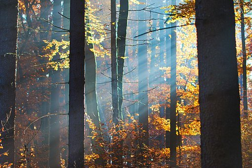 Forest, Autumn, Morning Sun, Trees, Landscape, Fog