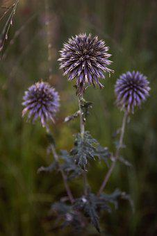 Flowers, Botany, Landscape, Plant, Botanical, Garden