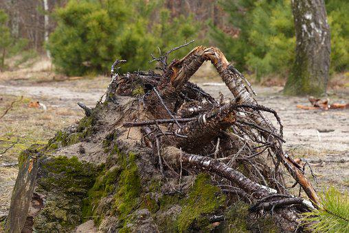Forest, Nature, Spring, Root, Spacer