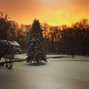 Winter Scene, Snow, Morning Light, Pine Trees, Weather