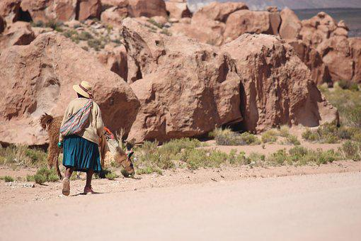 Lhamas, Llamas, Atacama, Alessandrobecker, Cholita
