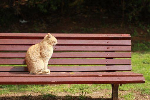 Cat, Sun, Bench, Park, Relaxing