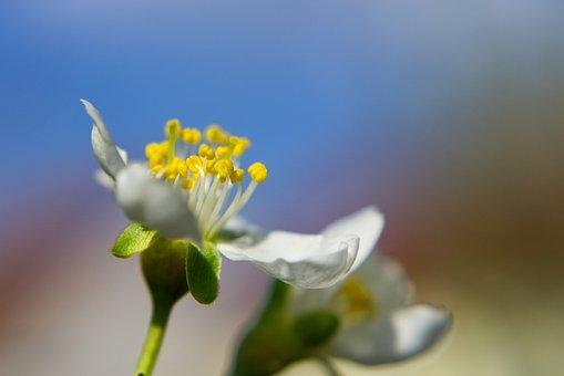Blossom, Bloom, Cherry, Macro, Close Up, Sprinkle, Tree