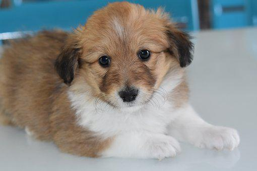 Puppy, Pup, Dog, Animal, Canine, Adorable, Dog Portrait