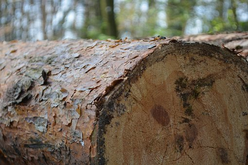 Tree, Log, Green, Forest, Out, Wood, Hack, Cases, Bark