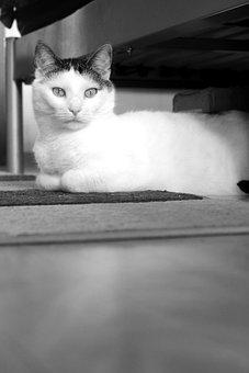 Pet, Cat, Animal, Domestic Cat, Kitten, Fur, Trust