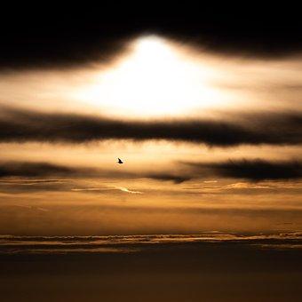 Sunrise, Explosion, Sun, Sunset, Clouds, Dark, Bird