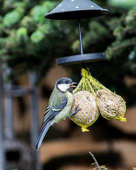 Tit, Songbird, Garden, Plumage, Bill, Feather, Eat