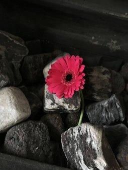 Flower, Fireplace, Chimney, Pink, Delicate, Gerbera