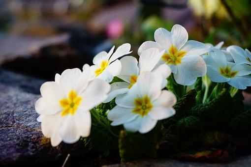 Spring, Nature, Flora, Garden, Green, Landscape, White