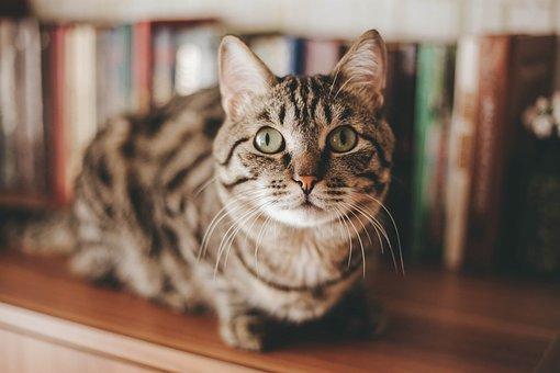 Cat, Animal, Kitten, Friendship, Pet, Fur, Portrait