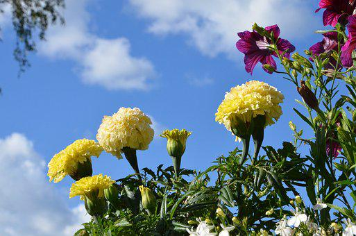 Summer, Flowers, Nature, Flower, Spring, Plant, Garden