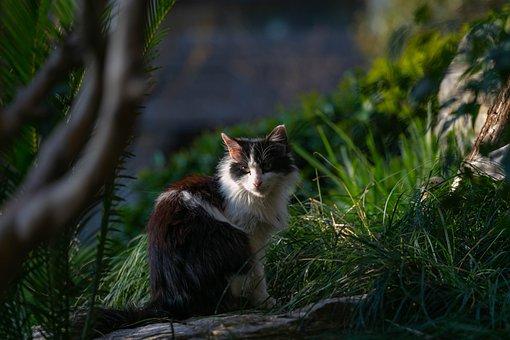 Cat, Black White, Green, Spring, Eyes, Beauty, Tree